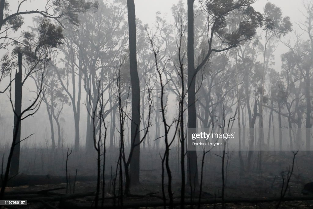 Victorian Bushfire Coverage TBC : News Photo