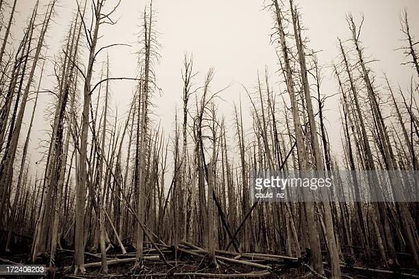 Burnt Out Forest