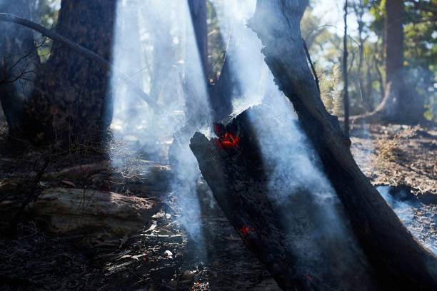 AUS: Firefighters Remain On High Alert As Bushfire Conditions Ease Across NSW