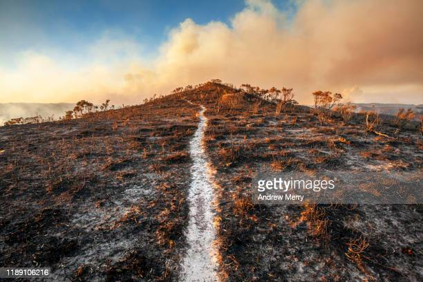 burnt out walking track to the grose valley no 2, blue mountains, australia - endurance stock pictures, royalty-free photos & images