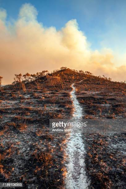burnt out walking track to the grose valley no 3, blue mountains, australia - endurance stock pictures, royalty-free photos & images