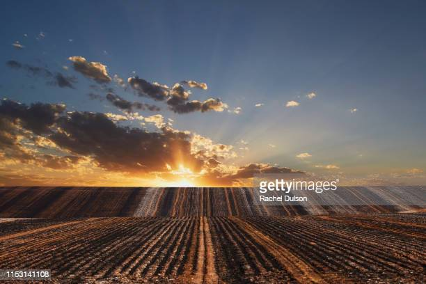 burnt ploughed fields - ワガワガ ストックフォトと画像