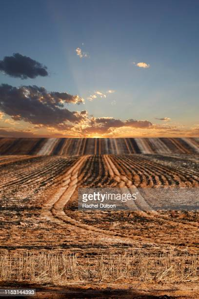 burnt ploughed fields - wagga wagga stock pictures, royalty-free photos & images