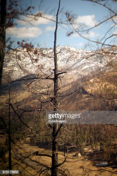 Burnt tree with mountains in background