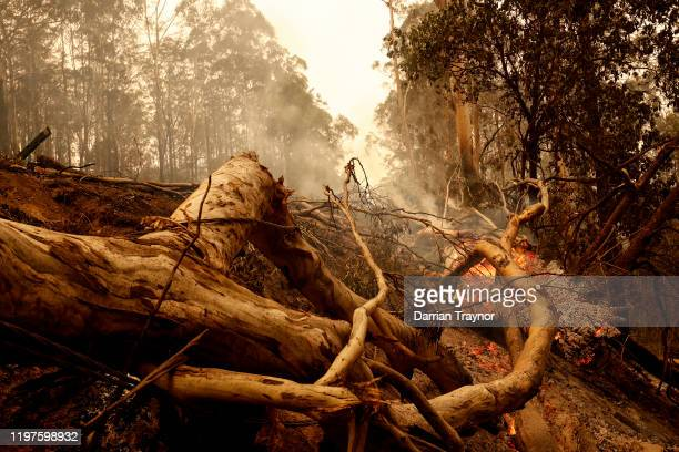 Burnt trees and debris cover the road on January 05, 2020 outside Cann River along the Monaro Highway, Australia. Two people are dead and 4 remain...