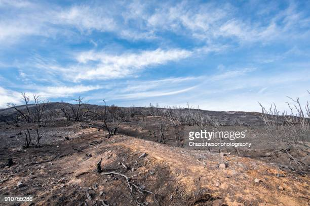 burnt trees and foliage after 2018 california wildfires