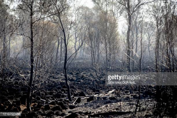 Burnt trees and peat are pictured in De Peel Nature Park near Deurne, The Netherlands, on April 23 after a wildfire broke out in the Deurnese Peel...