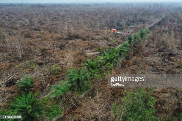 Burnt trees are pictured after a forest fire in Sampit Central Kalimantan province Indonesia October 2 2019 Firefighters military personnel and...