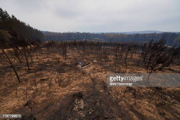 Burnt trees are pictured in the Wingello State Forest on January 06 2020 in Wingello Australia Cooler conditions and light rain has provided some...