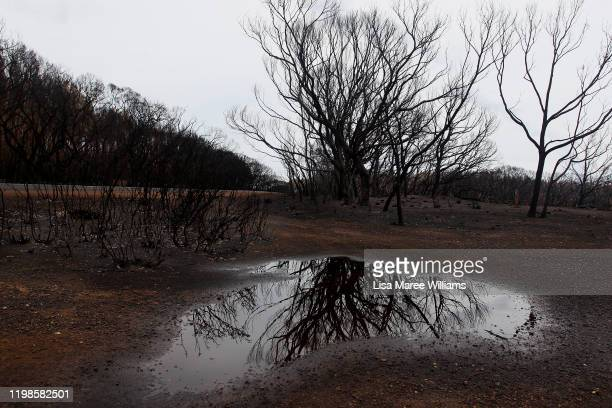 Burnt trees are reflected in a puddle of rain water at the edge of the Playford Highway outside Parndana on January 10 2020 on Kangaroo Island...