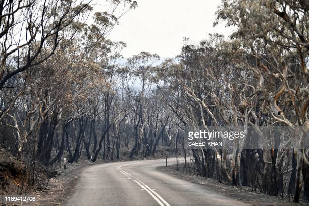 TOPSHOT Burnt trees are seen after a bushfire in Mount Weison in Blue Mountains some 120 kilometres northwest of Sydney on December 18 2019 Australia...