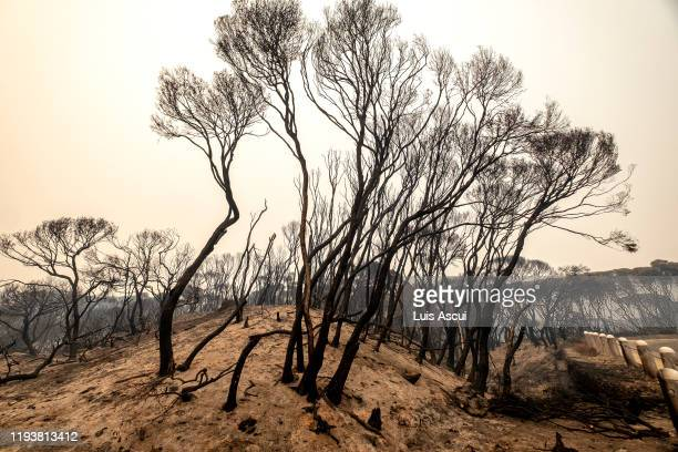 Burnt trees are seen in Mallacoota on January 15 Australia The Princes Highway between Mallacoota and Orbost remains closed to public due to the risk...