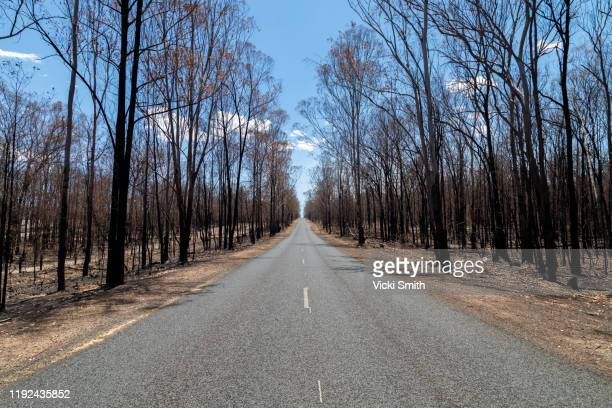 burnt trees,blackened tree trunks along side a road - bushfire australia stock pictures, royalty-free photos & images