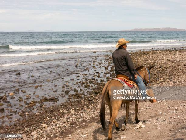 burro cowboy - mexican riding donkey stock photos and pictures