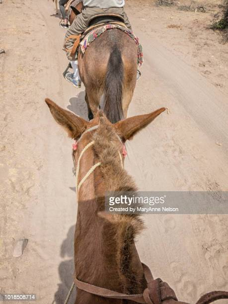 burro riders in a row - mexican riding donkey stock photos and pictures