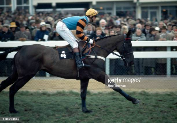 Burrough Hill Lad ridden by Phil Tuck the winners of the Gold Cup at the Cheltenham National Hunt Festival on 15th March 1984