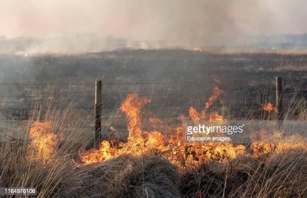 Bursdon Moor Hartland North Devon England UK Fire burning close to the boundary fence Of Bursdon Moor in North Devon