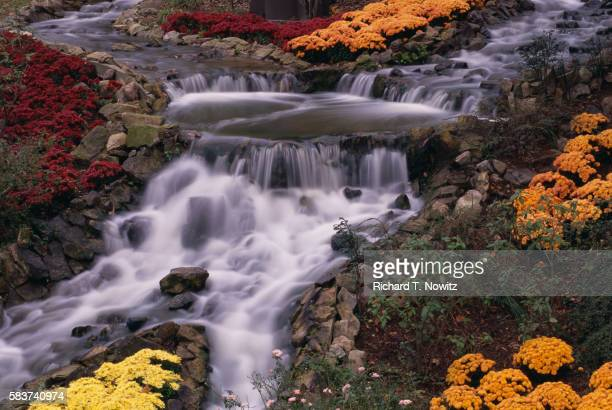 busch gardens waterfall - williamsburg virginia stock pictures, royalty-free photos & images