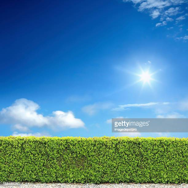 bush fence and sunny sky - bush stock pictures, royalty-free photos & images