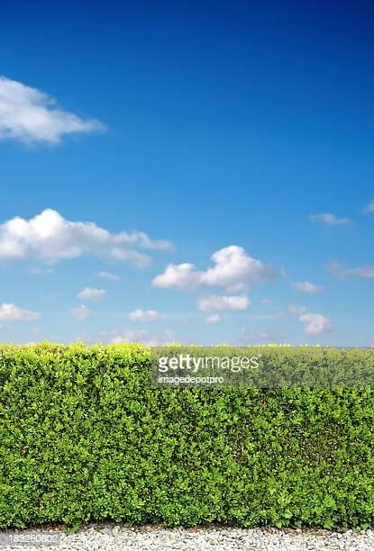 bush fence