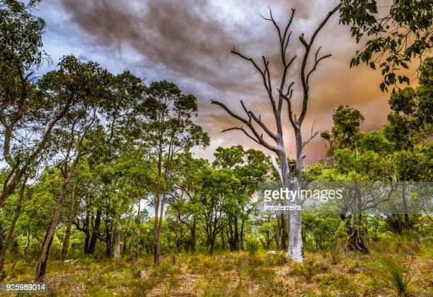 bush fire burning in the hills of perth, western australia, australia - burning bush stock pictures, royalty-free photos & images