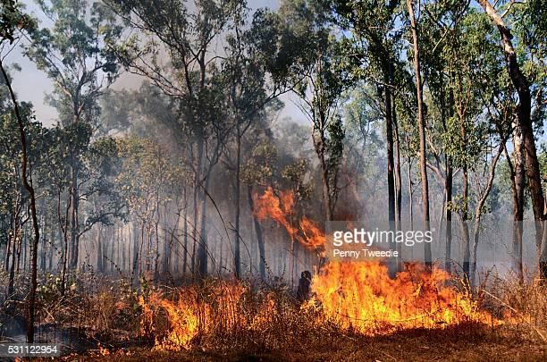 bush fire in central arnhem land - アーネム ストックフォトと画像