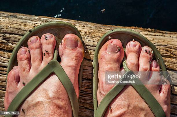 bush fly toe tickle - images of ugly feet stock photos and pictures