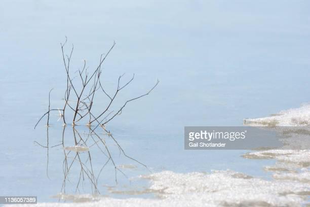 Bush reflected in Melting Ice
