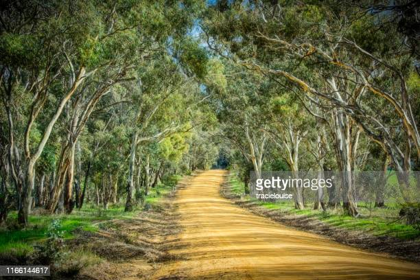 bush road - eucalyptus tree stock pictures, royalty-free photos & images