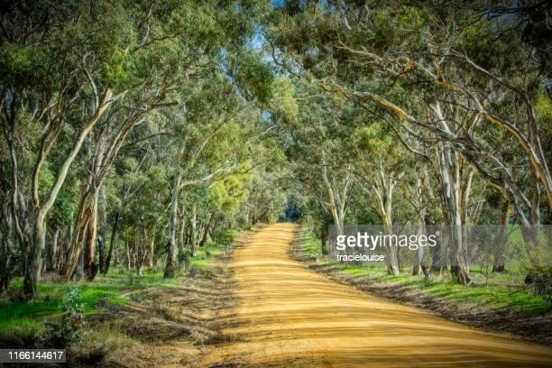 bush road - victoria australia stock pictures, royalty-free photos & images