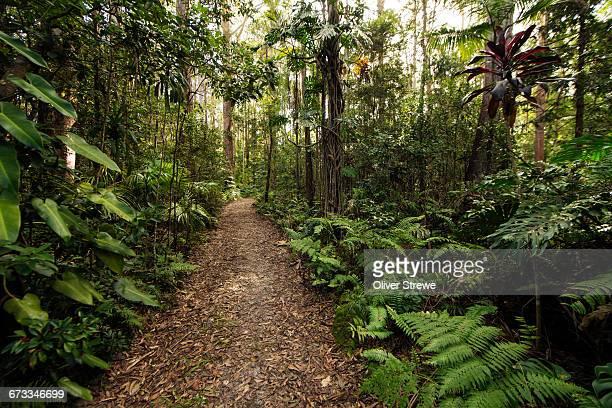 Bush Track, Eumundi