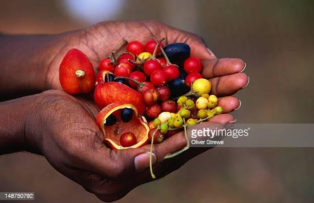 bush tucker which includes cedar bay cherry. - オーストラレーシア ストックフォトと画像