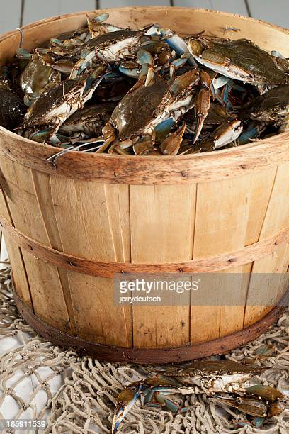 bushel basket of blue claws - blue crab stock photos and pictures