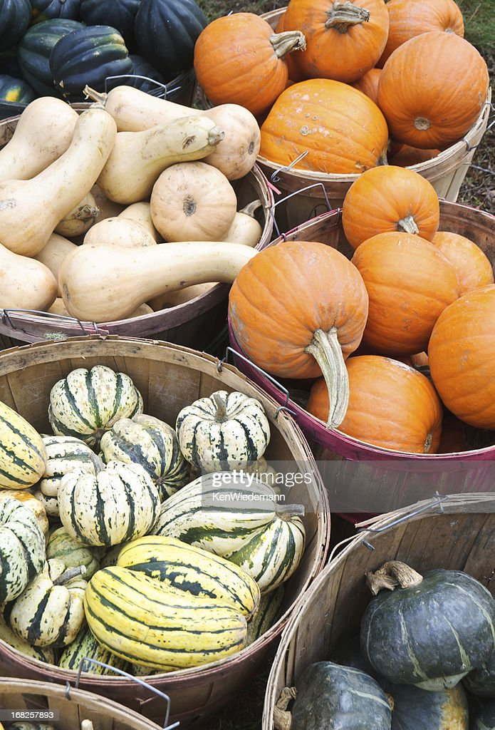 Bushel Baskets of Fall Squash : Stock Photo