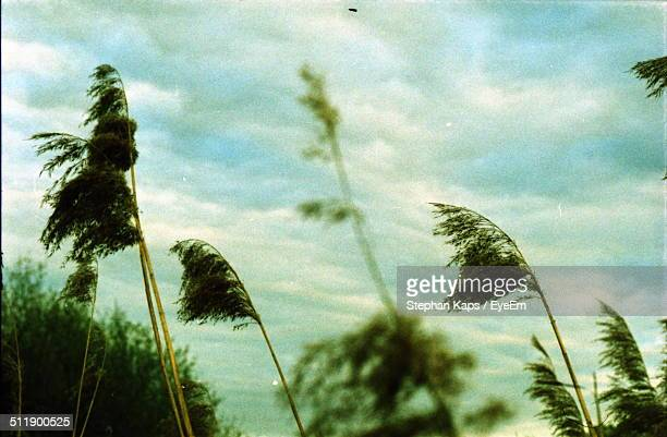 bushes blowing in a strong wind - gale stock photos and pictures