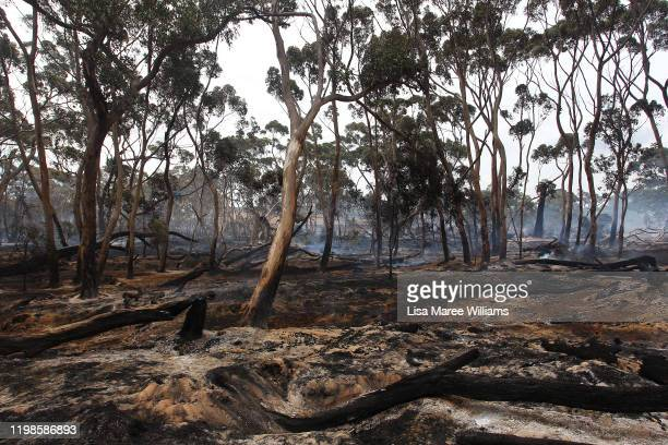 A bushfire continues to smolder at the edge of the Playford Highway outside Kingscote on January 10 2020 on Kangaroo Island Australia Over 100000...