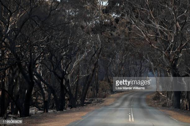 Bushfire damaged trees and flora line the South Coast Road towards Flinders Chase National Park on January 12 2020 on Kangaroo Island Australia Over...