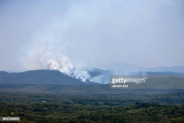 Bushfire in Rainforest, Kuranda, Cairns, Australia