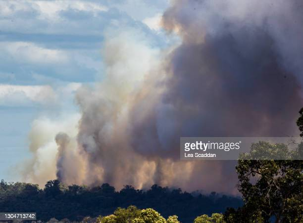 bushfire - forest fire stock pictures, royalty-free photos & images