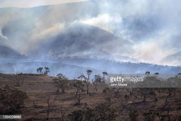 Bushfires burn along a mountainside on February 3, 2020 near Bumbalong, Australia. In many fire affected areas, surviving wildlife are suffering from...
