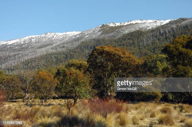 bushland and australian alps from bullocks track, kosciuszko national park, snowy mountains, new south wales, australia - new south wales stock pictures, royalty-free photos & images