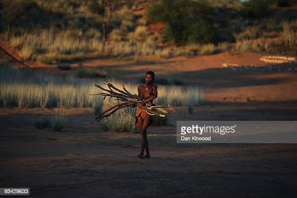 A bushman from the Khomani San community collects fire wood in the Southern Kalahari desert on October 16 2009 in the Kalahari South Africa T one of...