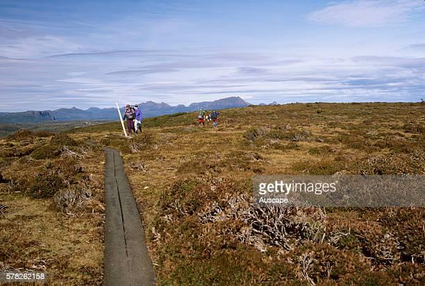 Bushwalkers on the Overland Track Cradle MountainLake St Clair National Park Tasmania Australia