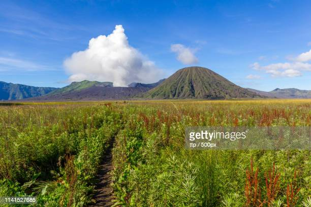 bushy field with mount bromo in background - tengger stock pictures, royalty-free photos & images