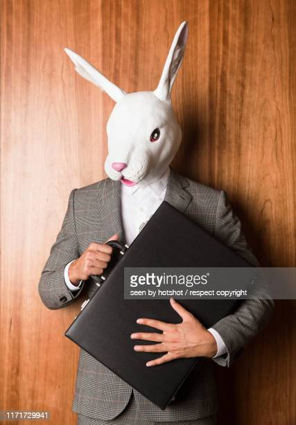business bunny - animal costume stock pictures, royalty-free photos & images