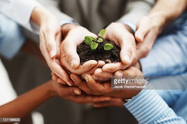 business development - hands holding seedling in a group - trade union stock pictures, royalty-free photos & images