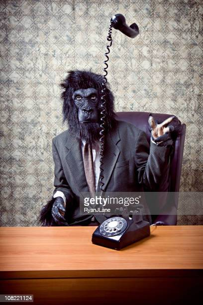 business gorilla in office throwing telephone - monkey man stock pictures, royalty-free photos & images
