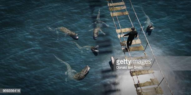 business man crossing dangerous rope bridge looking down at alligators in water below - danger photos et images de collection