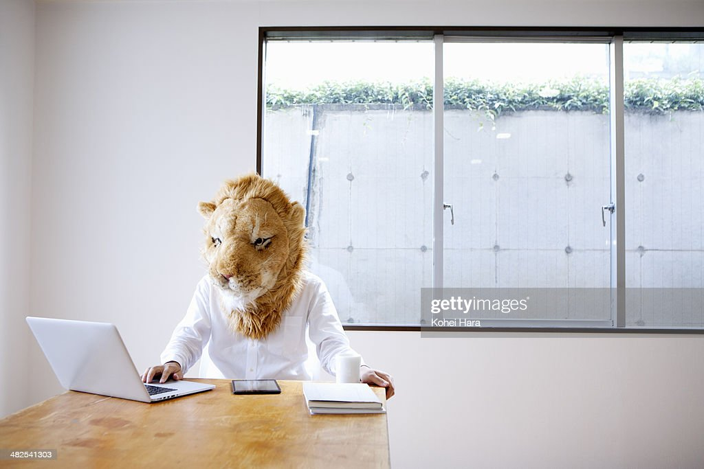 A business man with lion head working at office : Stock Photo