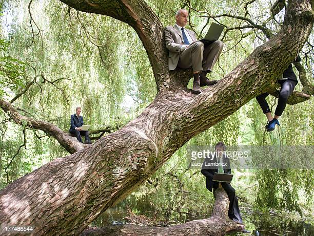 Business team working in natural tree office